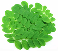 The amazing health benefits of Moringa oleifera